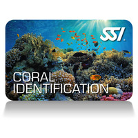 coral identification deep stop