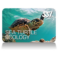 sea turtle ecology deep stop