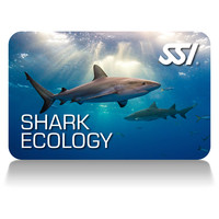 corso shark ecology deep stop